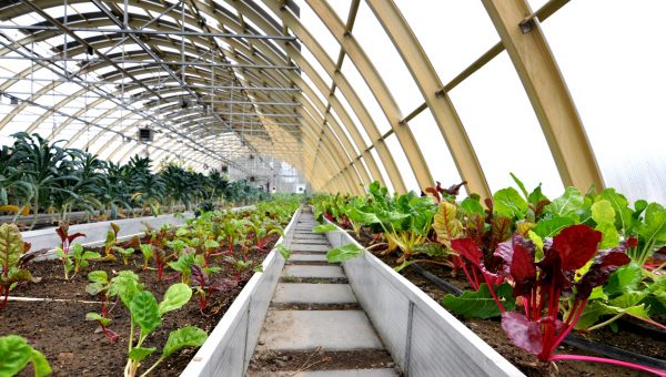 Sustainable Living: World's First Solar Greenhouse at Little River Flower Farm